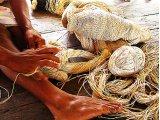 Moriche Palm σχοινί